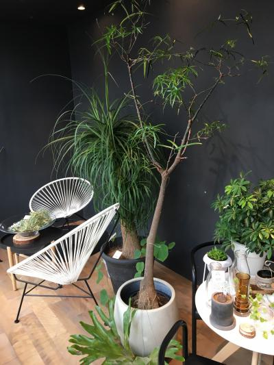 image 続・観葉植物の話。